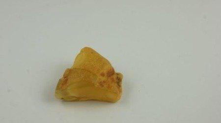 bursztyn bałtycki surowy żółty naturalny